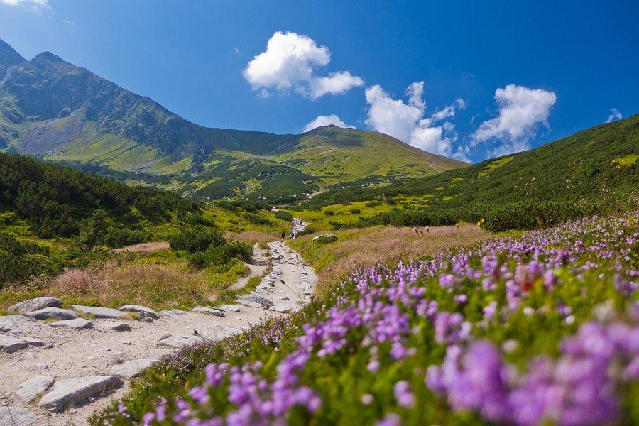 Summer in Tatra National Park, Poland