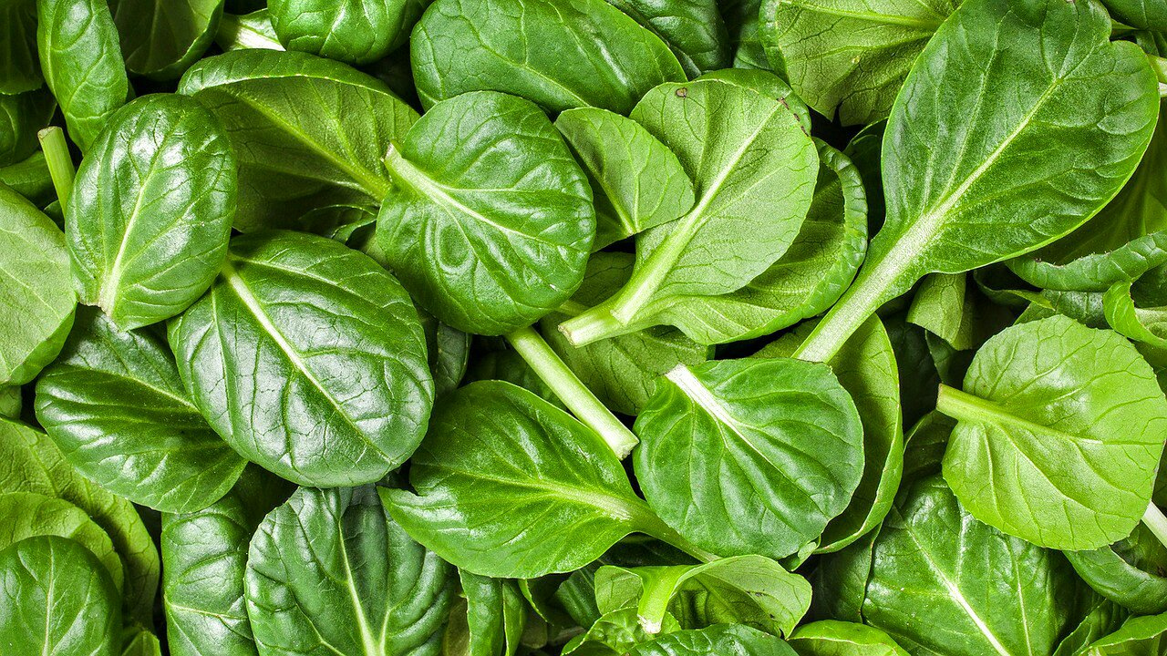 Spinach baby leaves